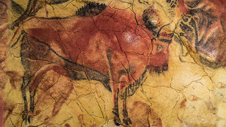 paiting of bison on cave wall