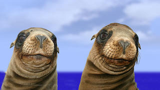 two seals against ocean and sky background